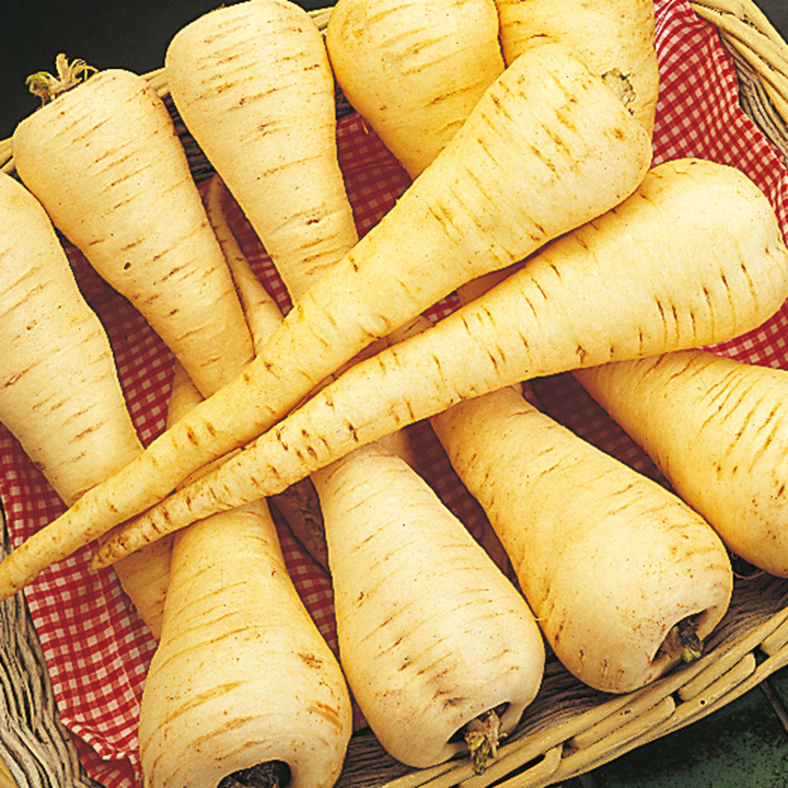 Parsnip Seeds - Cobham Improved Marrow - Triple Pack
