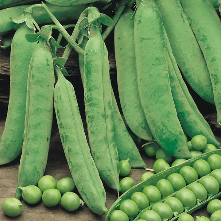 Pea Plants - Douce Provence