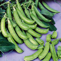Pea Plants Cascadia Sugar Snap