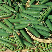 Pea Onward Seeds