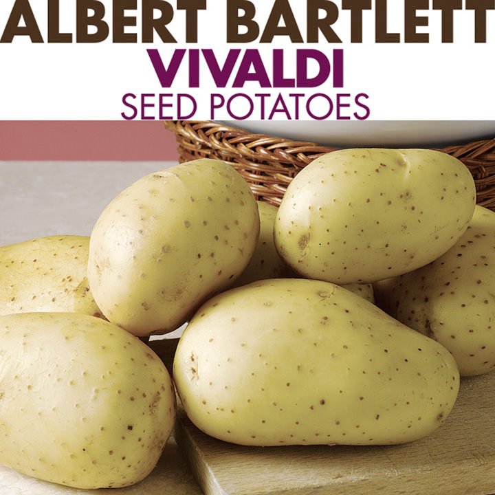 Nice ... Seed Potatoes   Patio Potato Growing Kit ...