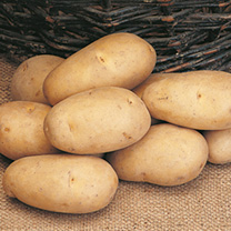 Seed Potatoes - Refill Pack