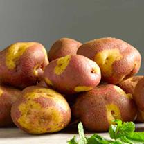 Seed Potatoes - Apache 1kg