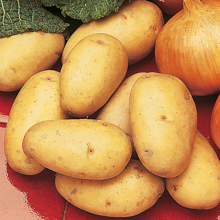 All Season Potato Taster Collection