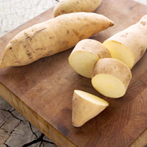 Sweet Potato Plants - Bonita