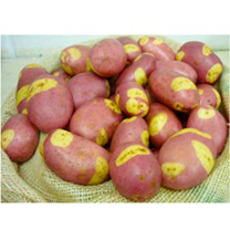 Seed Potatoes - Pink Gypsy 1kg