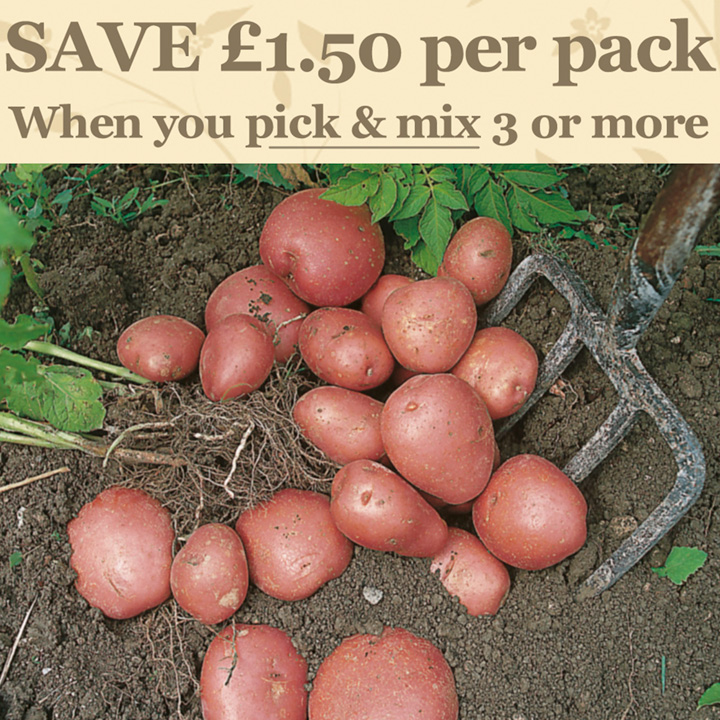 Seed Potatoes - Red Duke of York 1kg (First Early)