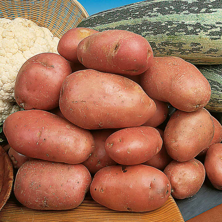 Seed Potatoes - Desiree 1kg