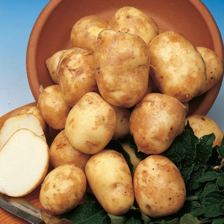 Seed Potatoes - Pentland Javelin 1kg