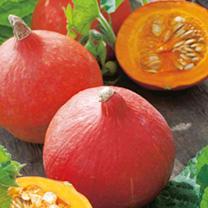 Pumpkin Seeds - Uchiki Kuri