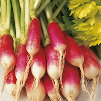 Radish French Breakfast 3 Seeds - Triple Pack