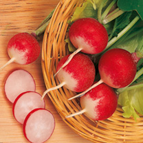 Radish Sparkler 3 Seeds - Triple Pack