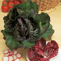 Radicchio Palla Rossa Red Devil Seeds