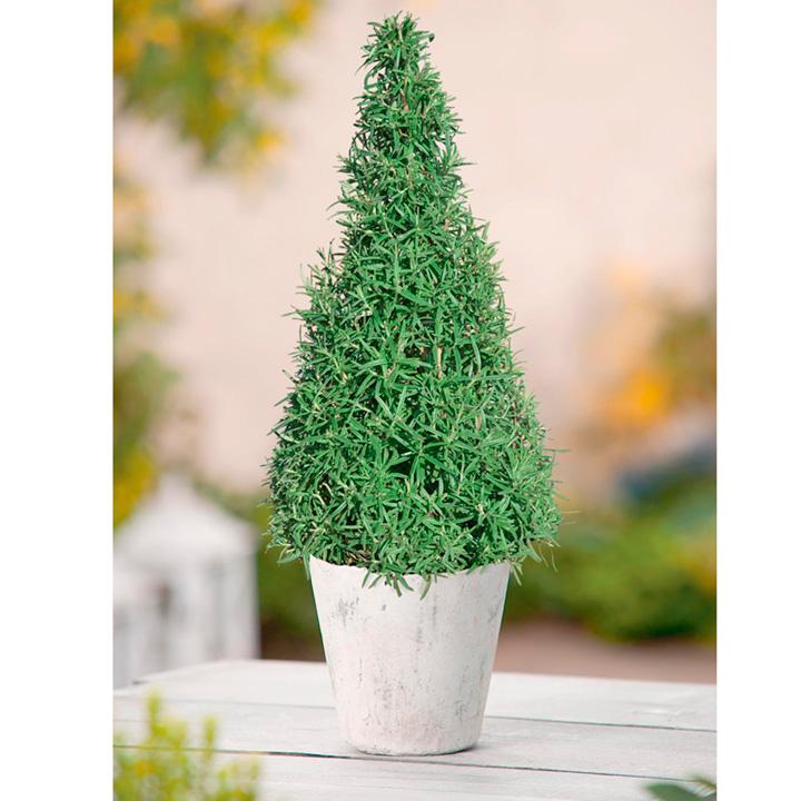Rosemary & Lavender Pyramid Trees