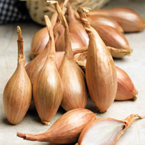 Shallot French Bulbs - Jermor