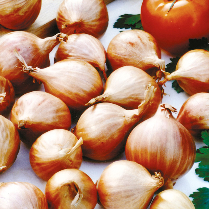 Shallot Red Gourmet 400g Pack
