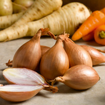 Shallot Bulbs - Red Gourmet