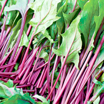 Spinach Seeds - Reddy F1