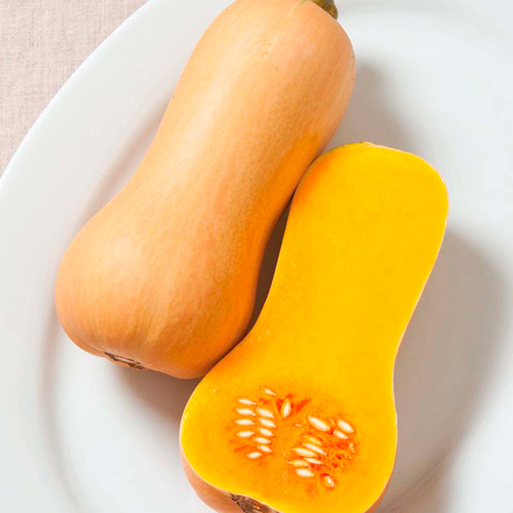 Butternut Squash Plants - Butterscotch