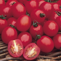 Tomato Seeds - Apero F1