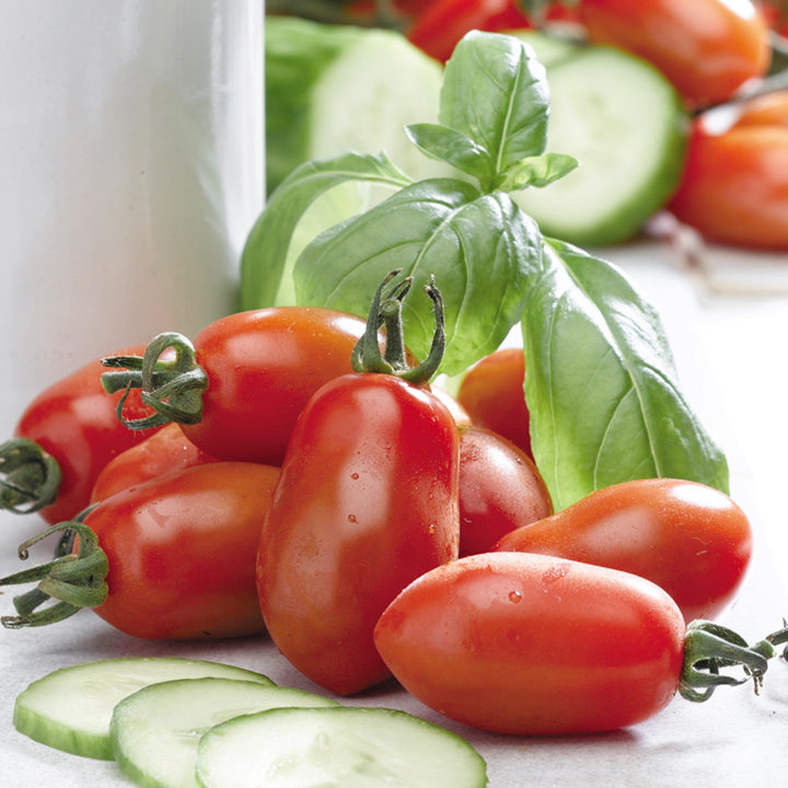 tomato san marzano 3 tomato plants vegetable plants vegetables garden dobies. Black Bedroom Furniture Sets. Home Design Ideas
