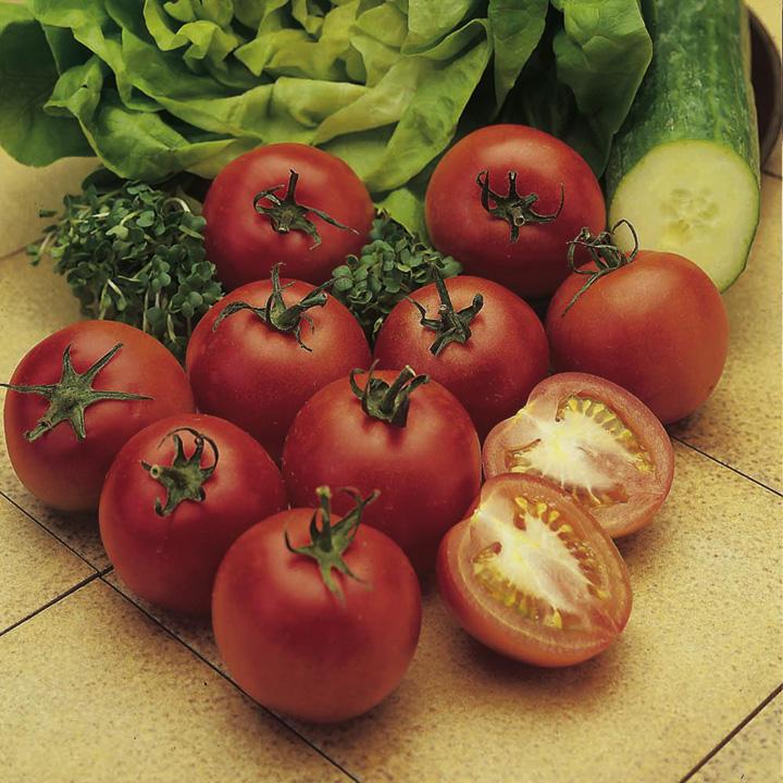 Tomato Plants - Alicante
