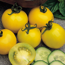 Tomato Seeds - Golden Sunrise