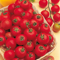 Tomato Cherry Belle F1 Seeds