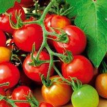 Tomato Seeds - Red Alert