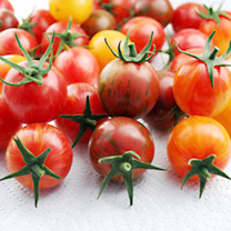 Tomato Artisan Plants - F1 Bumble Bees Mix