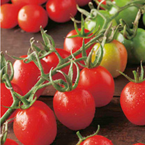 Tomato Plants - Cooking Collection