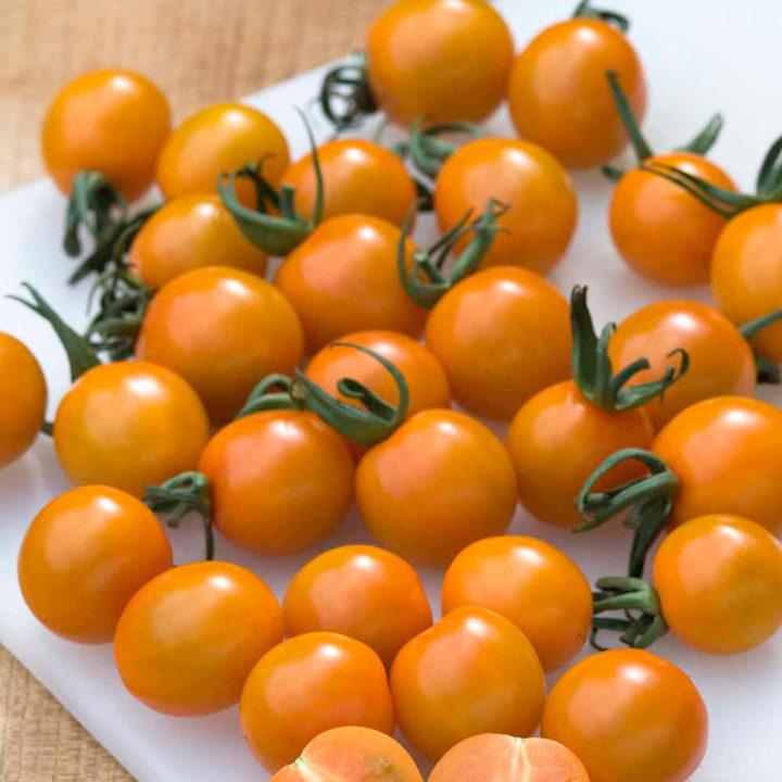 Grafted Tomato Plant - Orange Paruche
