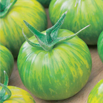 Tomato Plants - Green Zebra