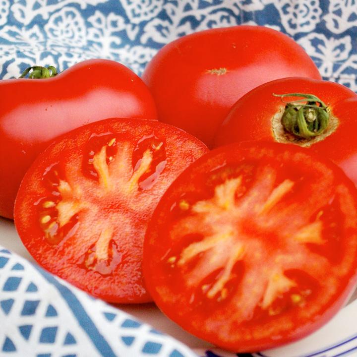 Tomato Plants - Russian Rose