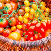 Tomato Plants - Mixed