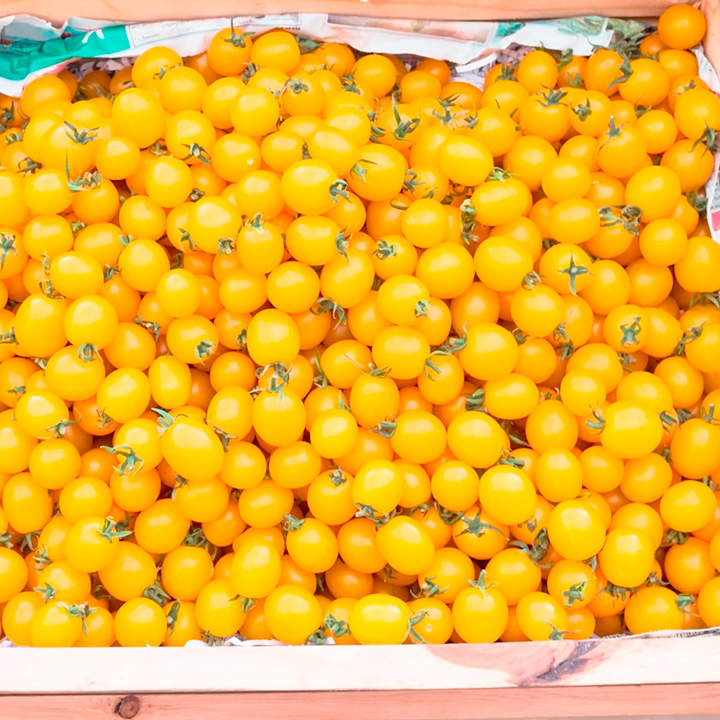 Tomato Seeds - Yellow Currant