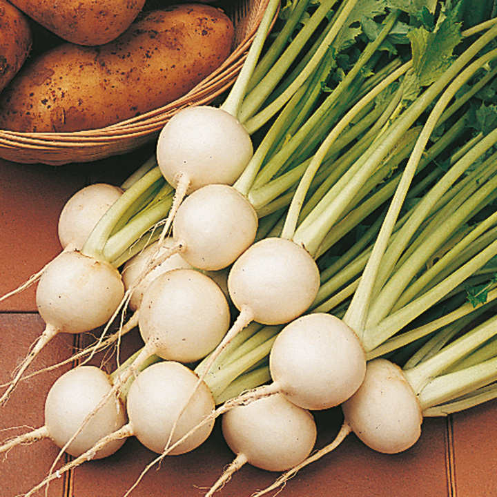 Turnip Seeds - Tokyo Cross F1