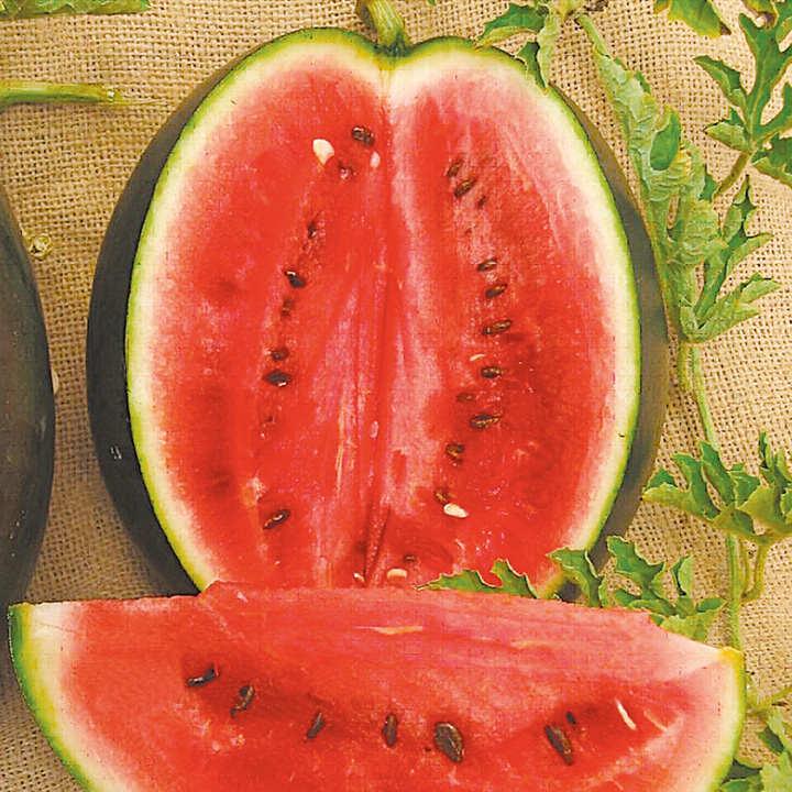 Watermelon Seeds - Rosario F1