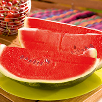 Watermelon Ingrid Grafted Plants