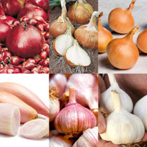 Bumper Autumn Planting Collection - Onion/Shallot/Garlic