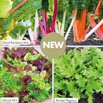 Cut-&-Come Again Winter Salad Plants - Collection