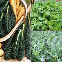 Winter Veg Plants - Collection