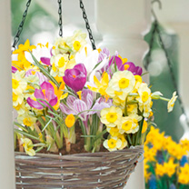 Hanging Basket with Bulbs