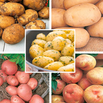 Garden Seed Potato Collection