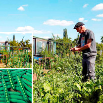 Pea Seeds and Grow Frame Deal