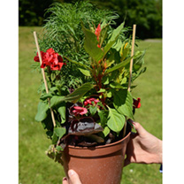Instant Garden Potted Plants