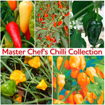 Master Chef's Chilli Collection
