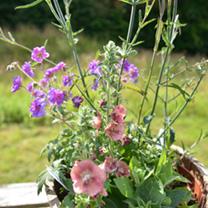 Perennial 5Ltr Lucky Dip Plant