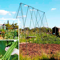 Runner Bean and Grow Frame Deal