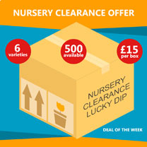 Nursery Clearance Offer